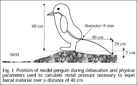 Penguin pooing diagram. 10 of the strangest pieces of research, from the Ig Nobel awards height=288